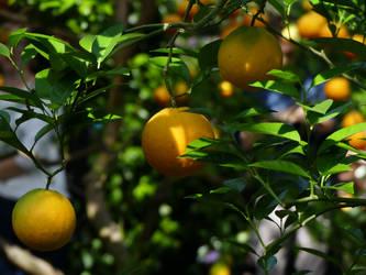 Citrus 3 by Yamraj88