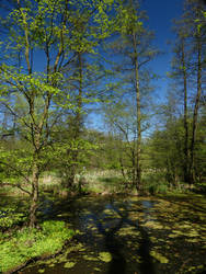 Lake in Pruszkow Park - Summer by Yamraj88