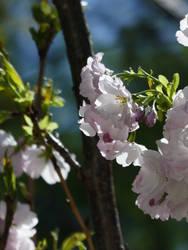 Pink flowers 3 by Yamraj88