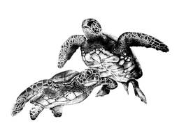Turtlesssss