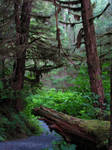 Tongass National Forest 1