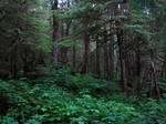 Tongass National Forest 7