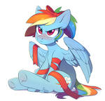 Christmas Dashie