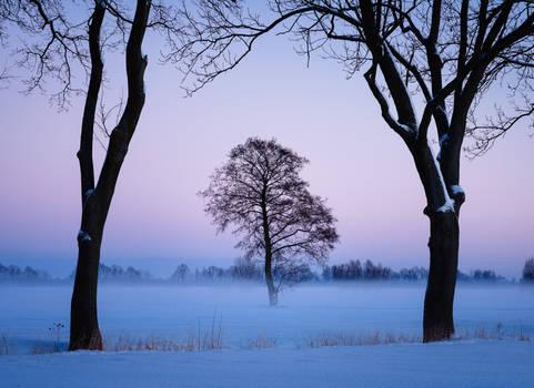 A lone tree...