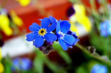 Small and blue by MimKa