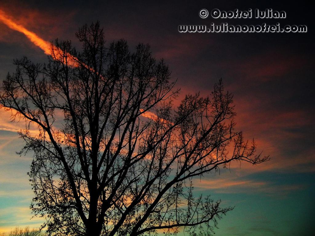 Tree by Revolt666