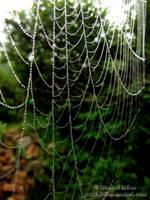 Spider Web 1 by Revolt666