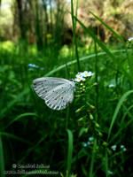 Butterfly by Revolt666