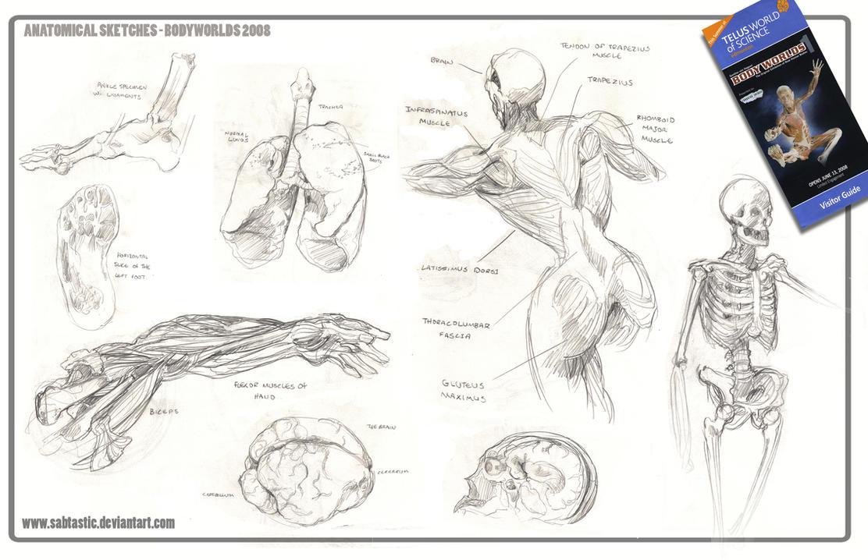 Anatomical Sketchdump by Sabtastic