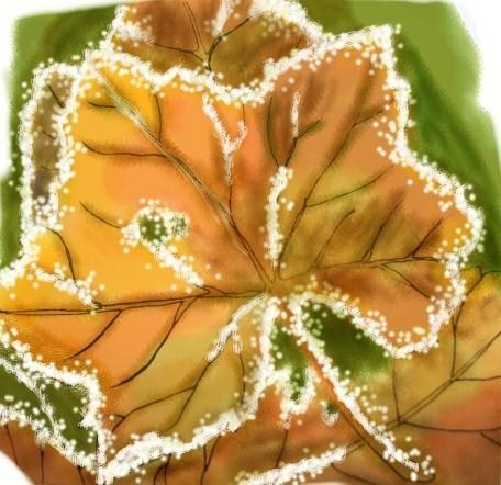 Frosty Leaves by JillianChan