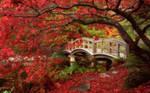 Japanese Garden, Royal Roads