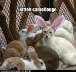 kitteh camoflouge
