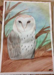 Barn Owl Watercolor