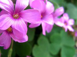 in bloom by glasschild