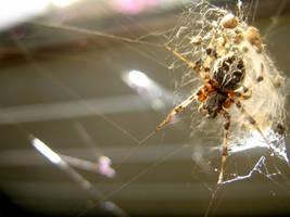 spider by glasschild