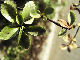 small nature by glasschild