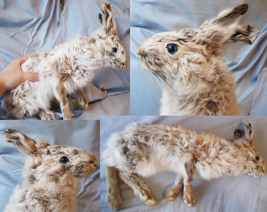 Snowshoe Hare soft-mount by CindarellaPop