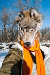 Grey wolf mask by CindarellaPop