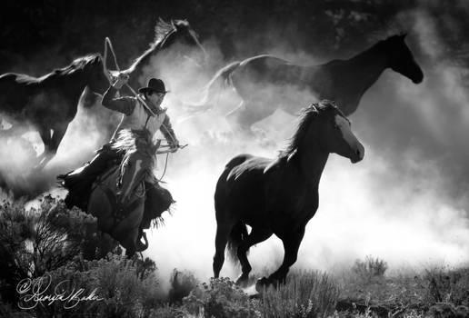 Horse-round-up