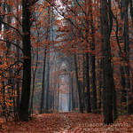 Through the Enchanted Forest