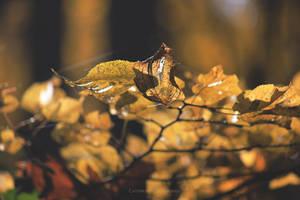 Autumn leaves II by firepaved