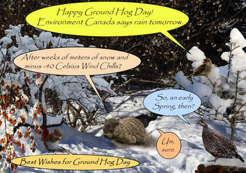Ground Hog Day by Can-Cat