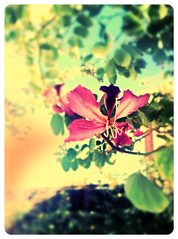 Flower by xXXxNightShadexXXx