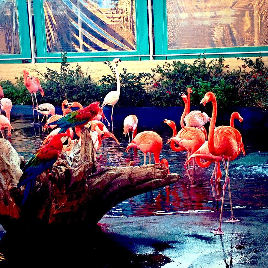 Flamingo's by xXXxNightShadexXXx