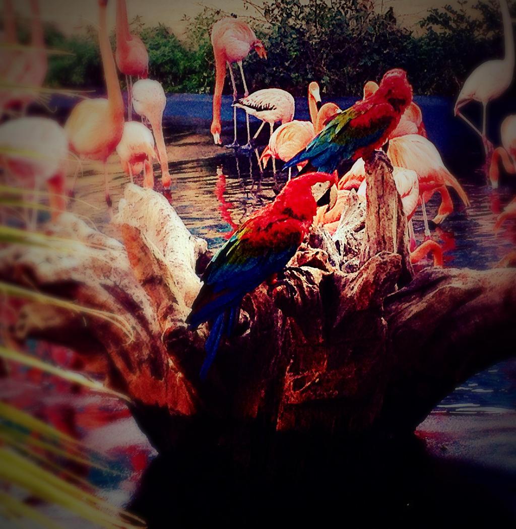 Parrots by xXXxNightShadexXXx