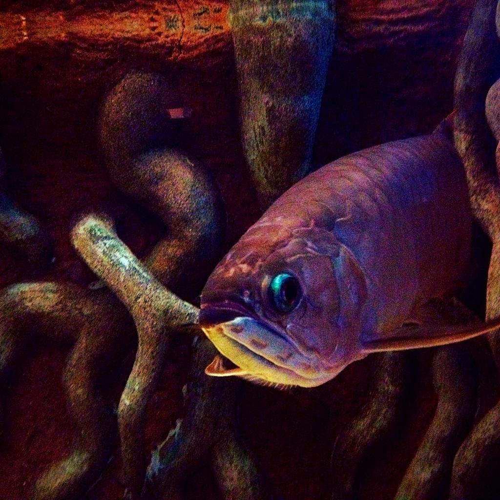 Hello Fish! by xXXxNightShadexXXx