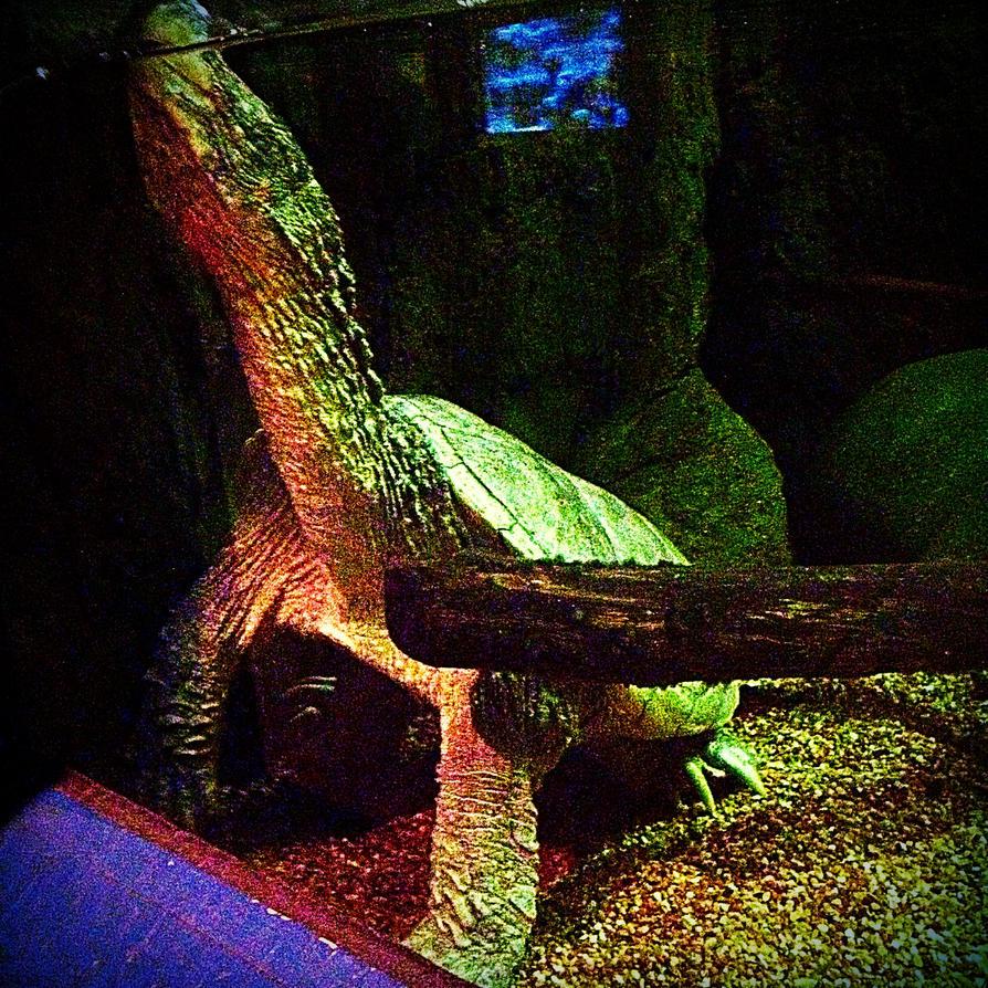 Turtle One! by xXXxNightShadexXXx