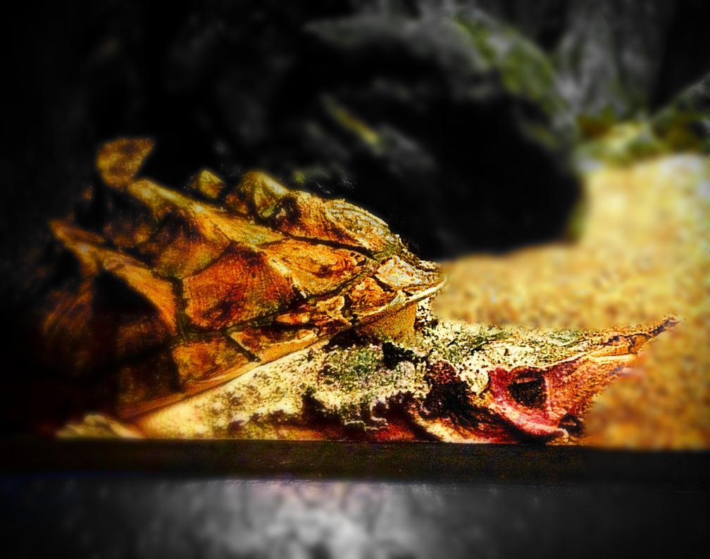 Turtle Two! by xXXxNightShadexXXx