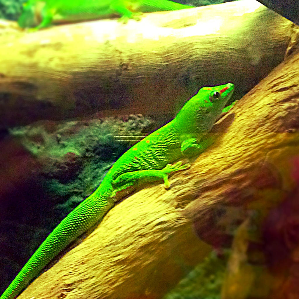 Lizard by xXXxNightShadexXXx