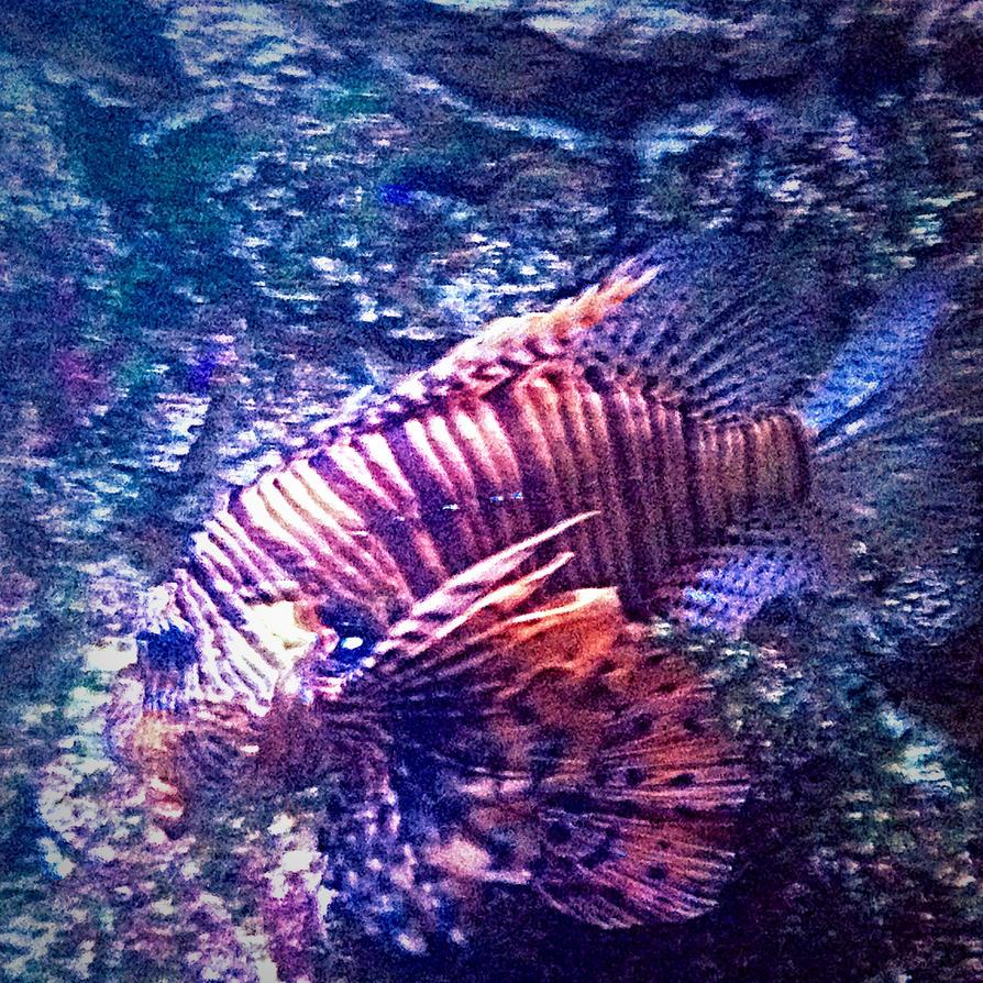 Fishy Fishy by xXXxNightShadexXXx