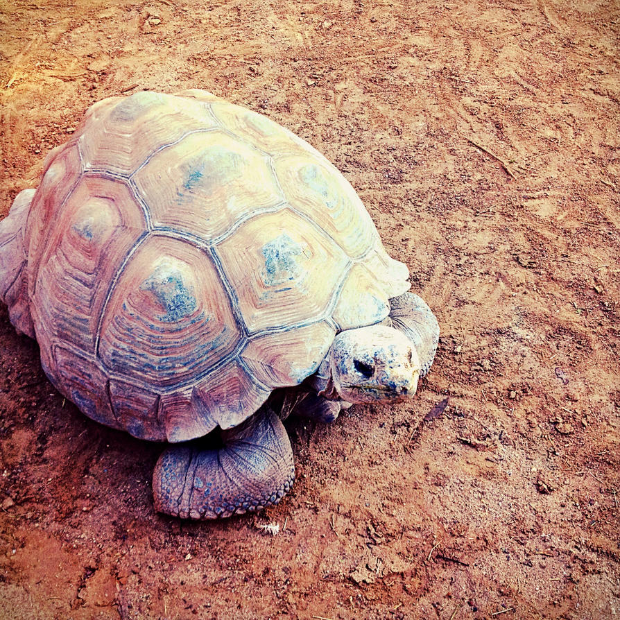 Turtle Three! by xXXxNightShadexXXx