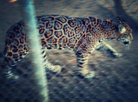On the Prowl by xXXxNightShadexXXx