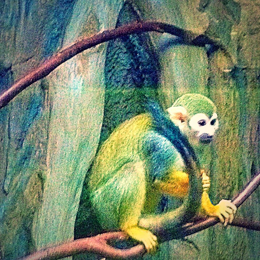 Monkey Monkey by xXXxNightShadexXXx