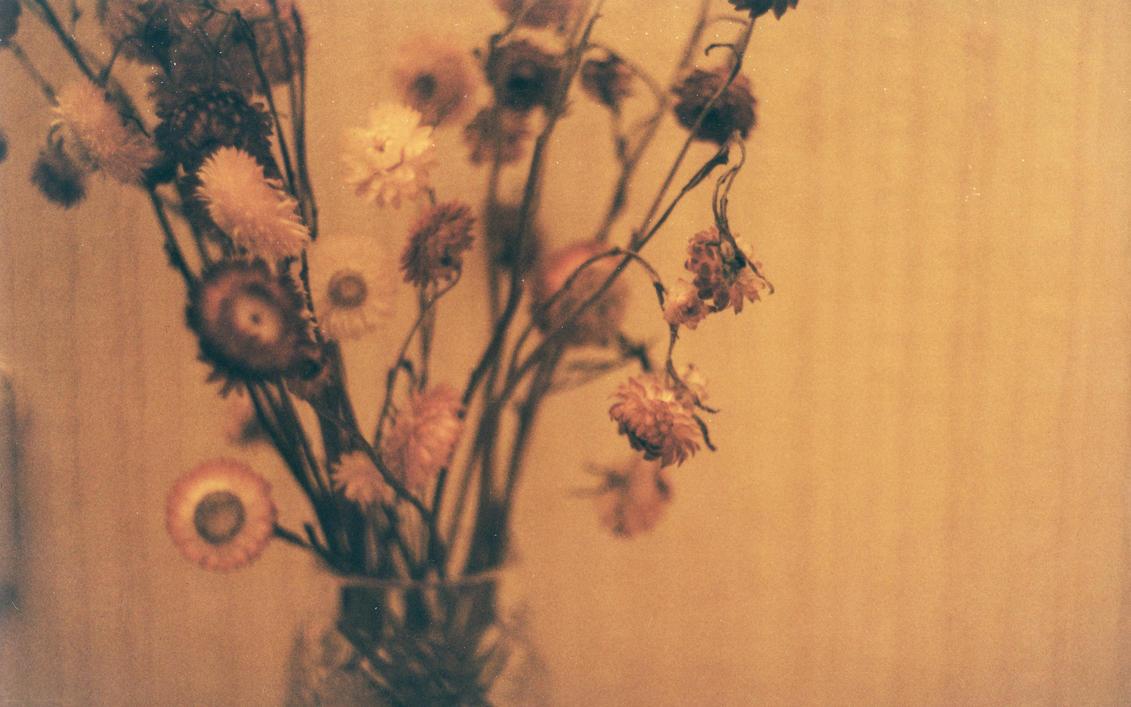 Dead Flowers By SammyLarina