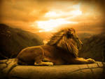 The king of the nature