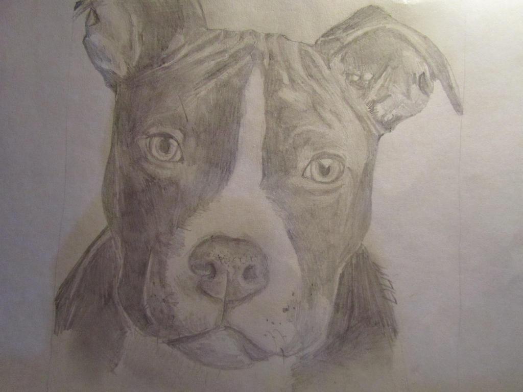 American Pitbull terrier puppy by Rthyin on DeviantArt