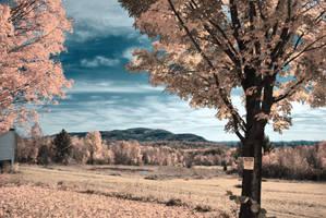 Autumn Fields by BellaCielo