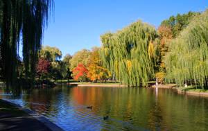 Boston Autumn by BellaCielo