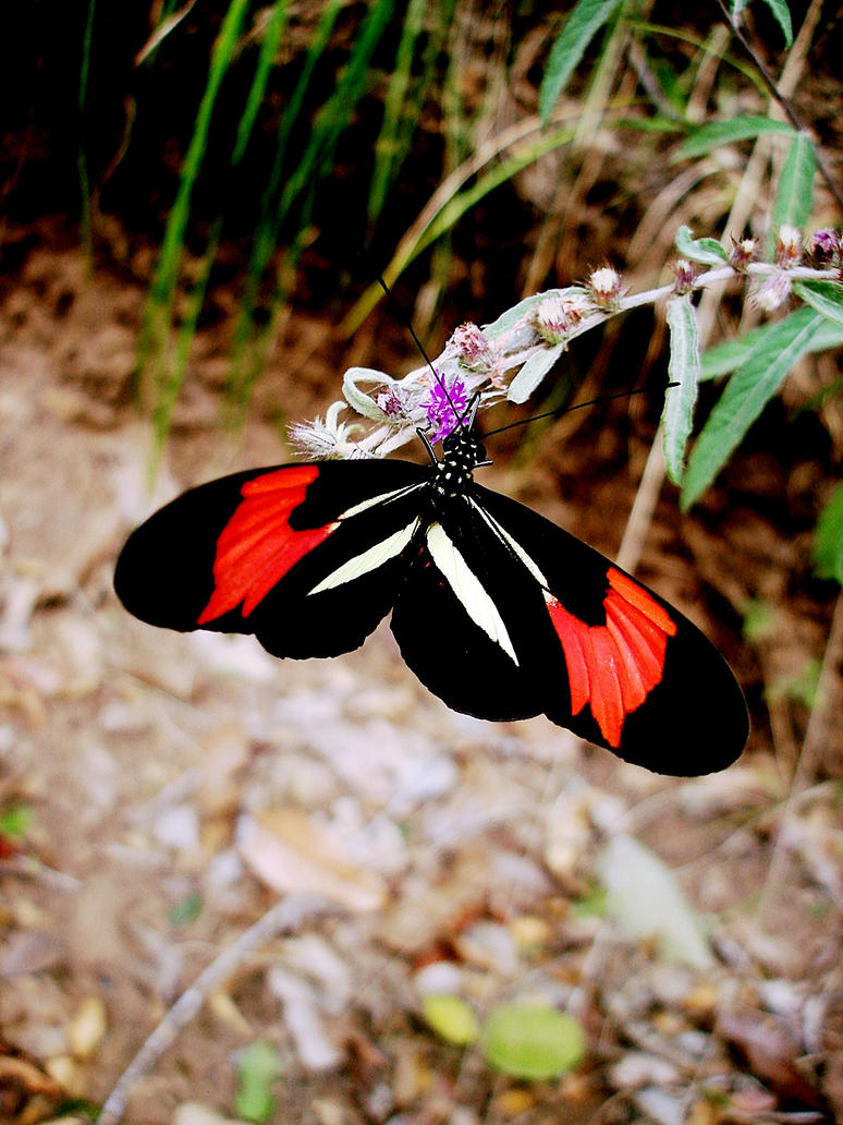 Butterfly flying away - photo#14