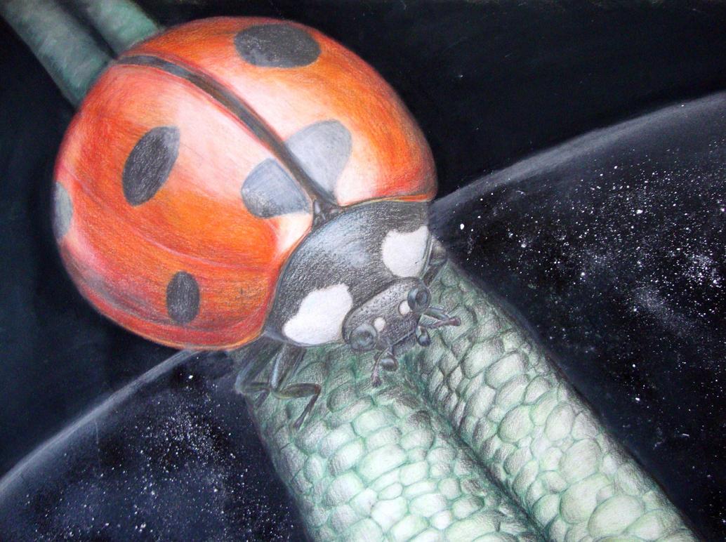 Lady Bubug by RitaSilvestre
