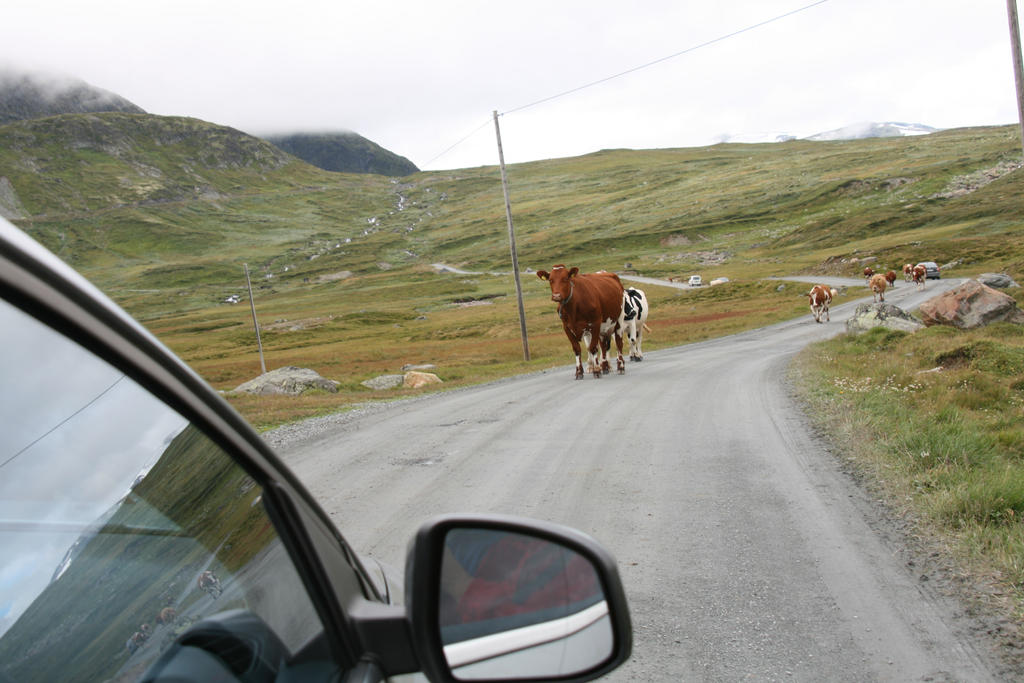 Just ordinary Norwegian roads by Riddande