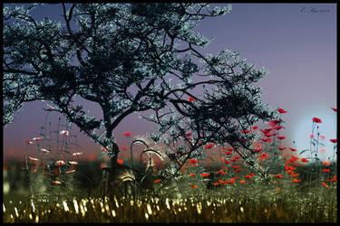 Mangroven und Mohn