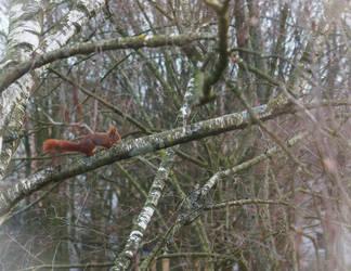 squirrel next my window