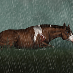 Rain by Tharkenta