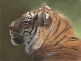 Tiger portrait pastel