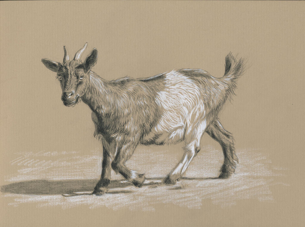 Goat : Black and white pencil on kraft paper by wimke